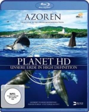 Azoren: Eine Reise zu den Meeresbewohnern Picos