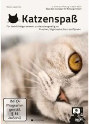 Katzenspass: Gute TV-Unterhaltung für Deine Katze