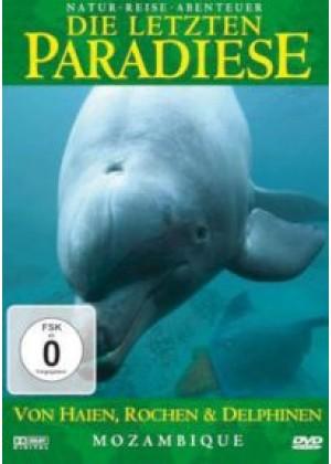 Mozambique - Von Haien, Rochen und Delphinen - Afrika